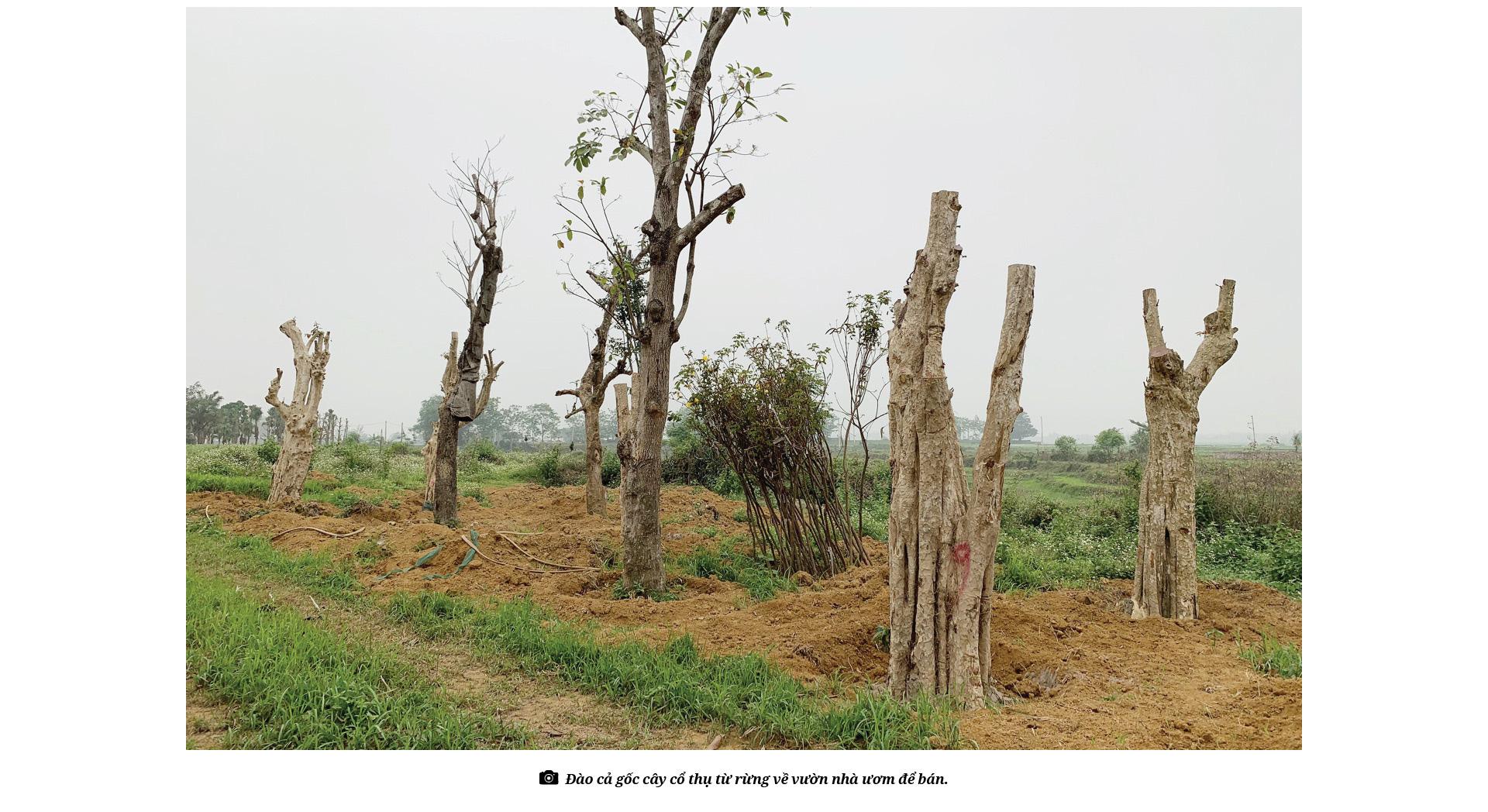 Bài 4: Rừng đang bị tàn sát khốc liệt bởi thú chơi cây cổ thụ như thế nào? - Ảnh 6.