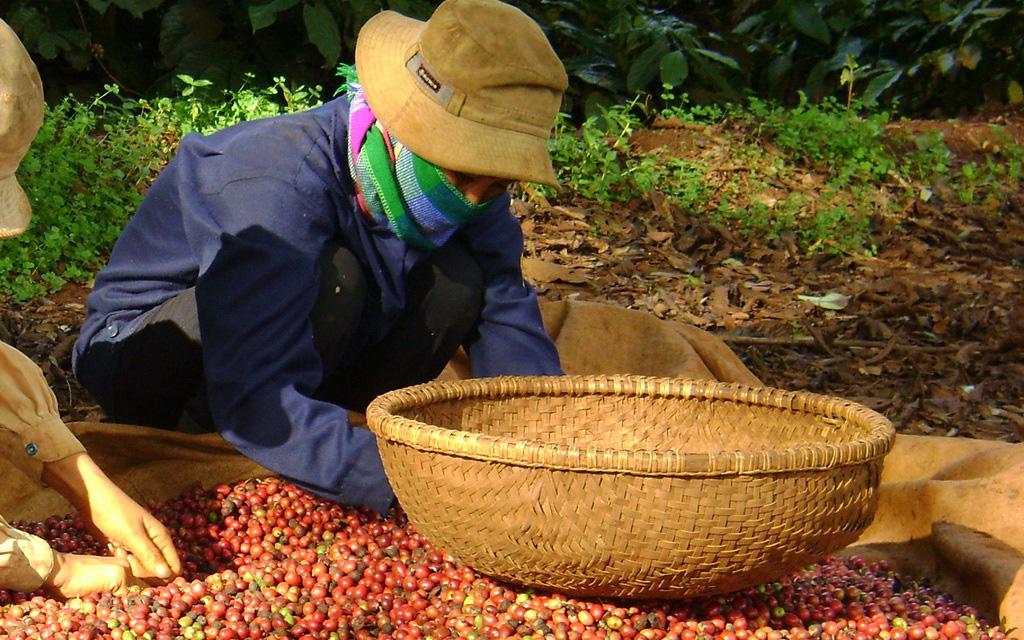 Giá cà phê đồng loạt tăng, 3 thị trường lớn nào đang tăng mua cà phê Việt Nam?