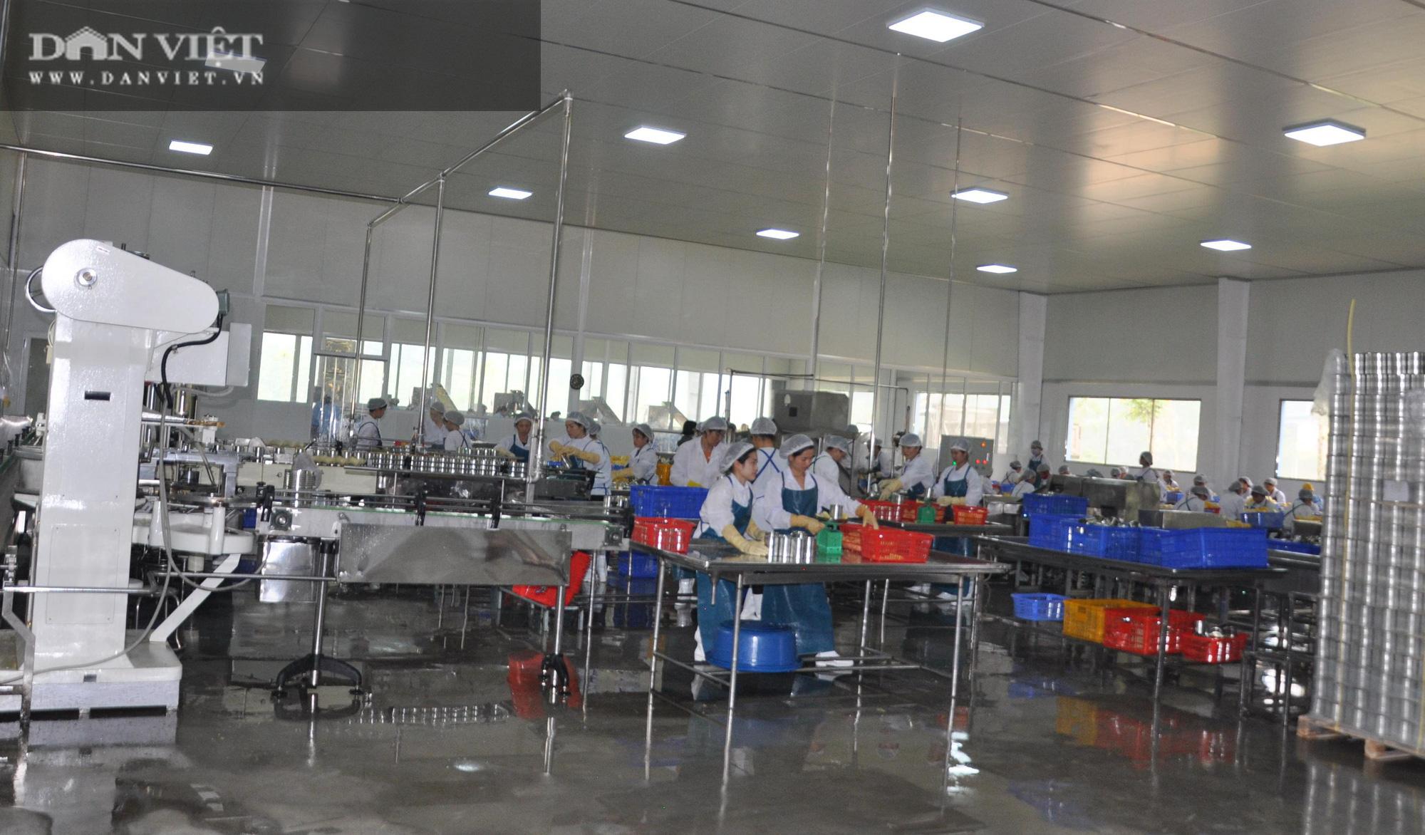 Chủ tịch Hội Nông dân Việt Nam thăm nhà máy chế biến rau quả xuất khẩu lớn ở huyện biên giới - Ảnh 5.