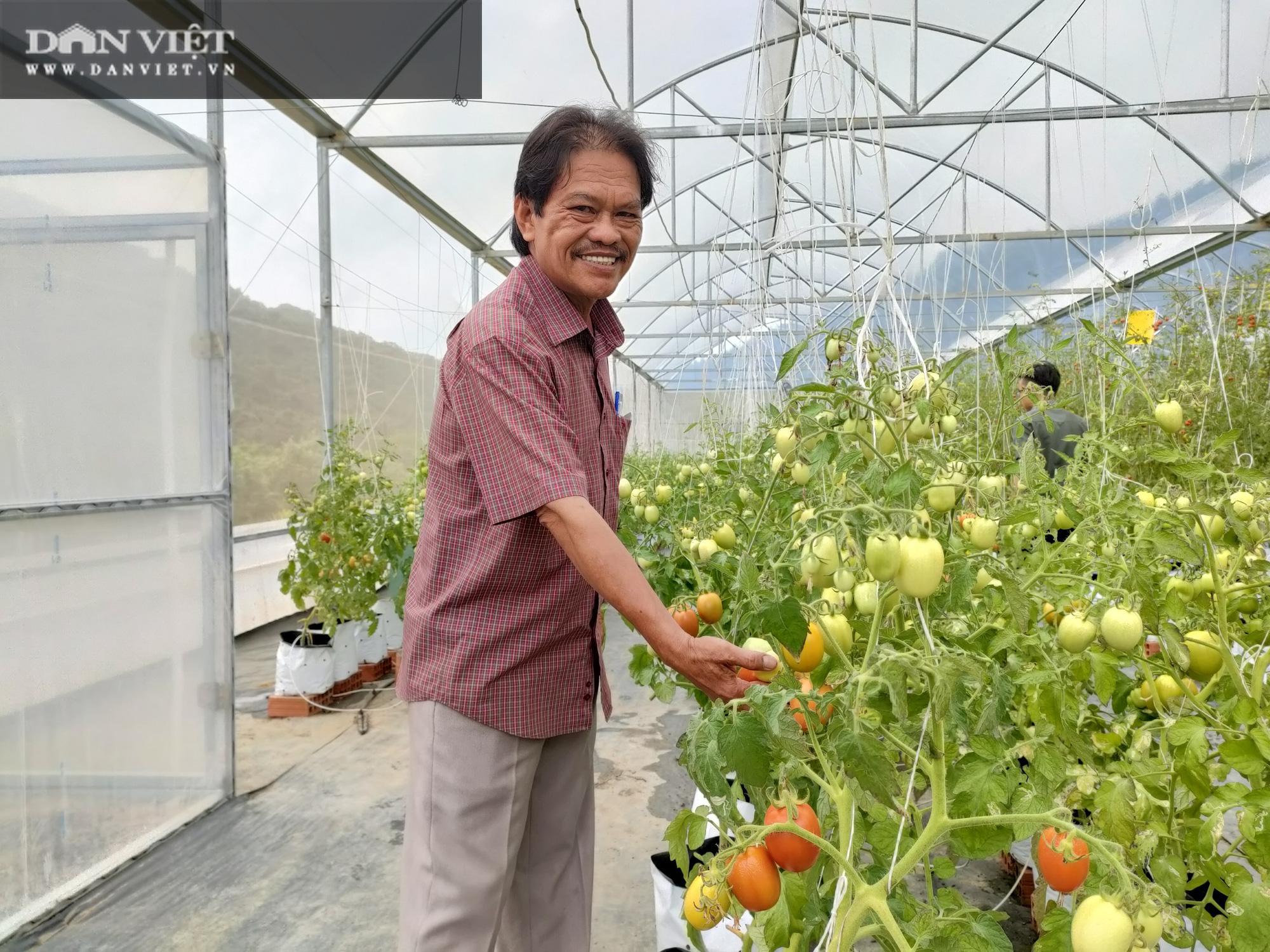 """Bình Định: Ứng dụng khoa học vào sản xuất nông nghiệp công nghệ cao, nông dân muốn mang đến sản phẩm """"siêu sạch"""" - Ảnh 3."""
