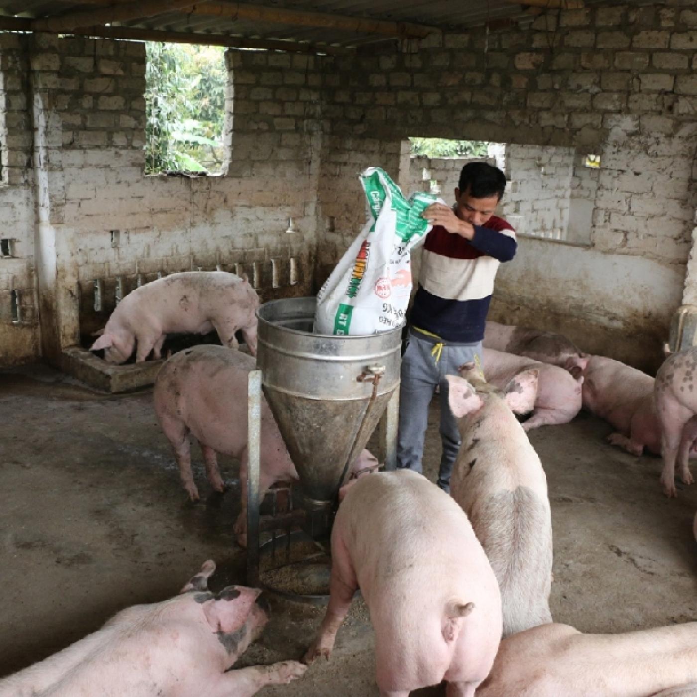 """Giá thức ăn chăn nuôi tăng """"nóng"""", ai cũng phàn nàn, Cục Chăn nuôi dự báo gì? - Ảnh 2."""