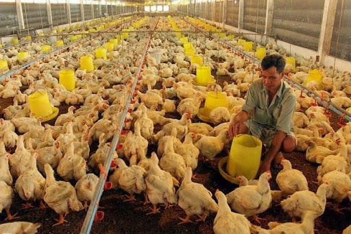 """Giá thức ăn chăn nuôi tăng """"nóng"""", ai cũng phàn nàn, Cục Chăn nuôi dự báo gì? - Ảnh 1."""