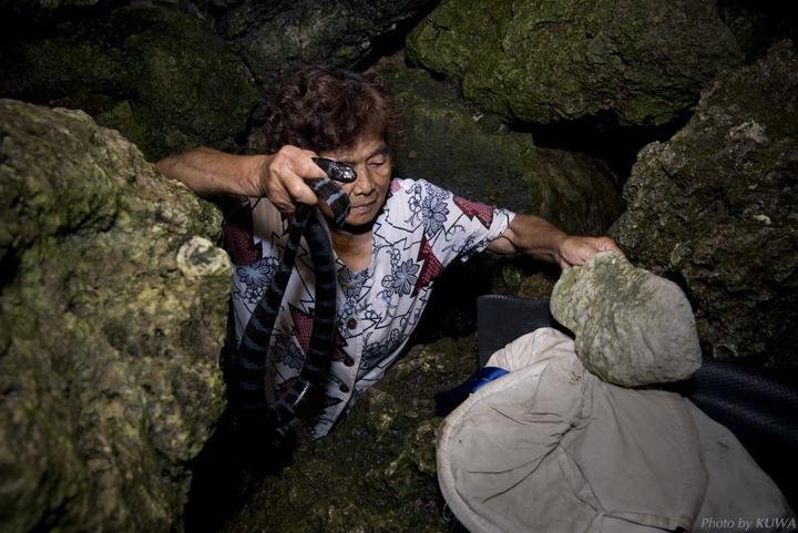Thót tim với hai cụ bà 70 tuổi dùng tay không bắt rắn biển cực độc  - Ảnh 2.