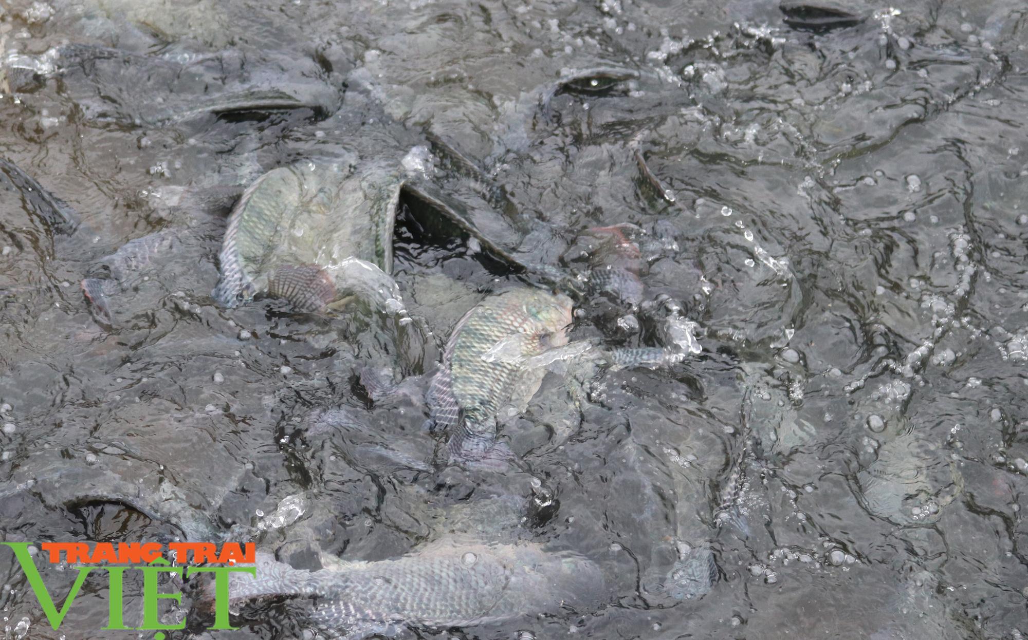 Cựu chiến binh có biệt tài dụ cá lên ăn thức ăn  - Ảnh 2.