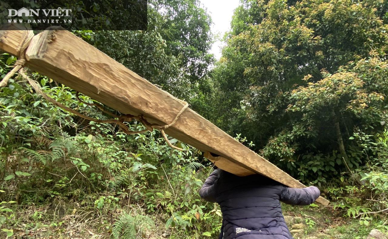 Video điều tra: Gỗ pơ mu từ rừng xanh đến tổng kho buôn gỗ - Ảnh 3.