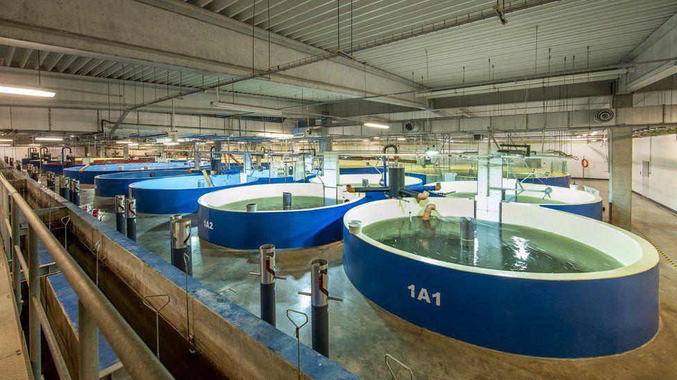 Biến điều điên rồ thành sự thật: Nuôi cá hồi trong bể cạn, đưa cá nước lạnh đến vùng nóng - Ảnh 3.