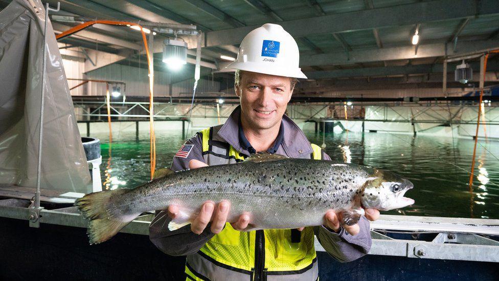 Biến điều điên rồ thành sự thật: Nuôi cá hồi trong bể cạn, đưa cá nước lạnh đến vùng nóng - Ảnh 2.