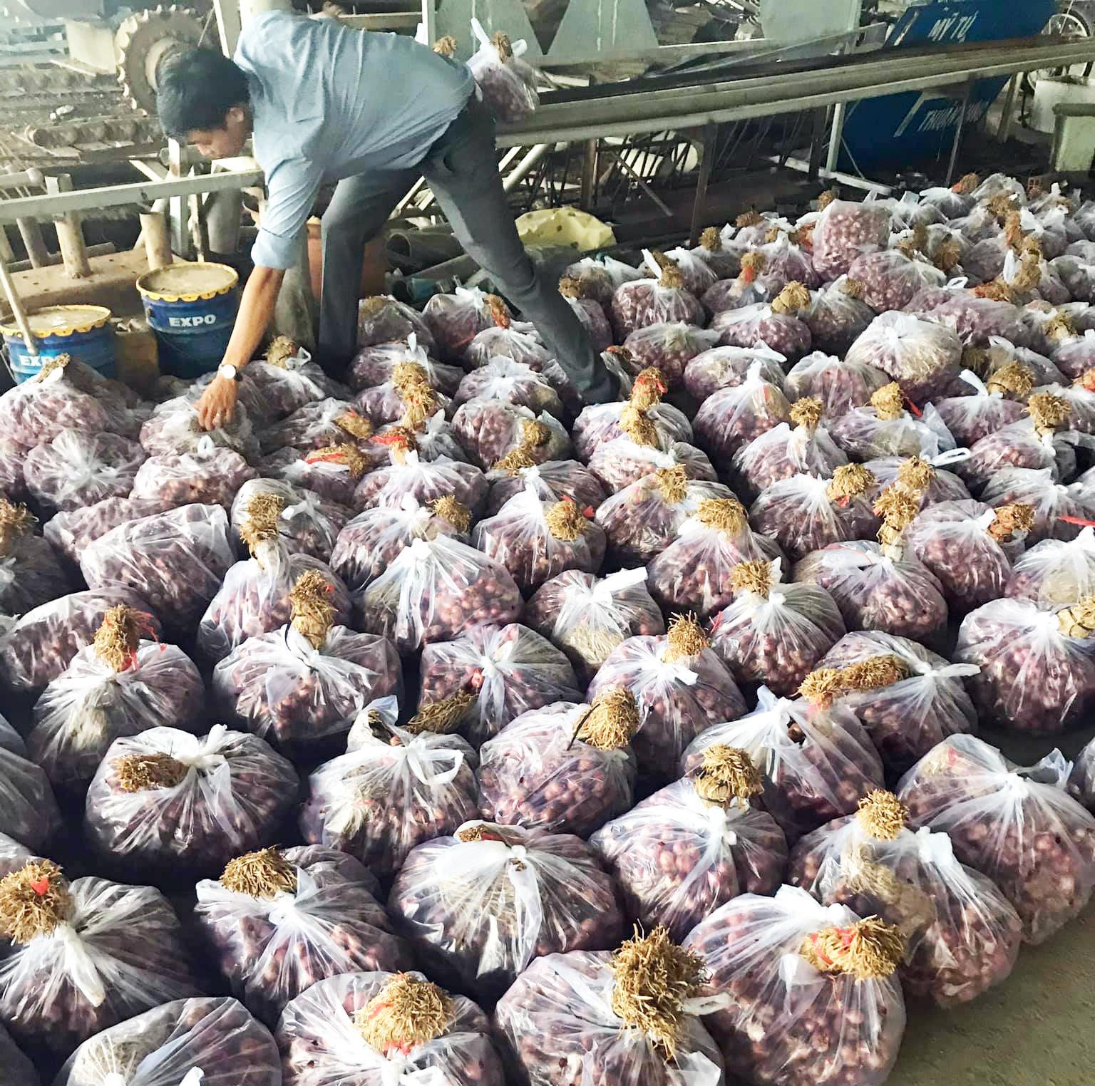 """Hơn 300 tấn hành tím Vĩnh Châu được """"giải cứu"""", riêng chủ tịch thị xã mua 2,7 tấn - Ảnh 3."""