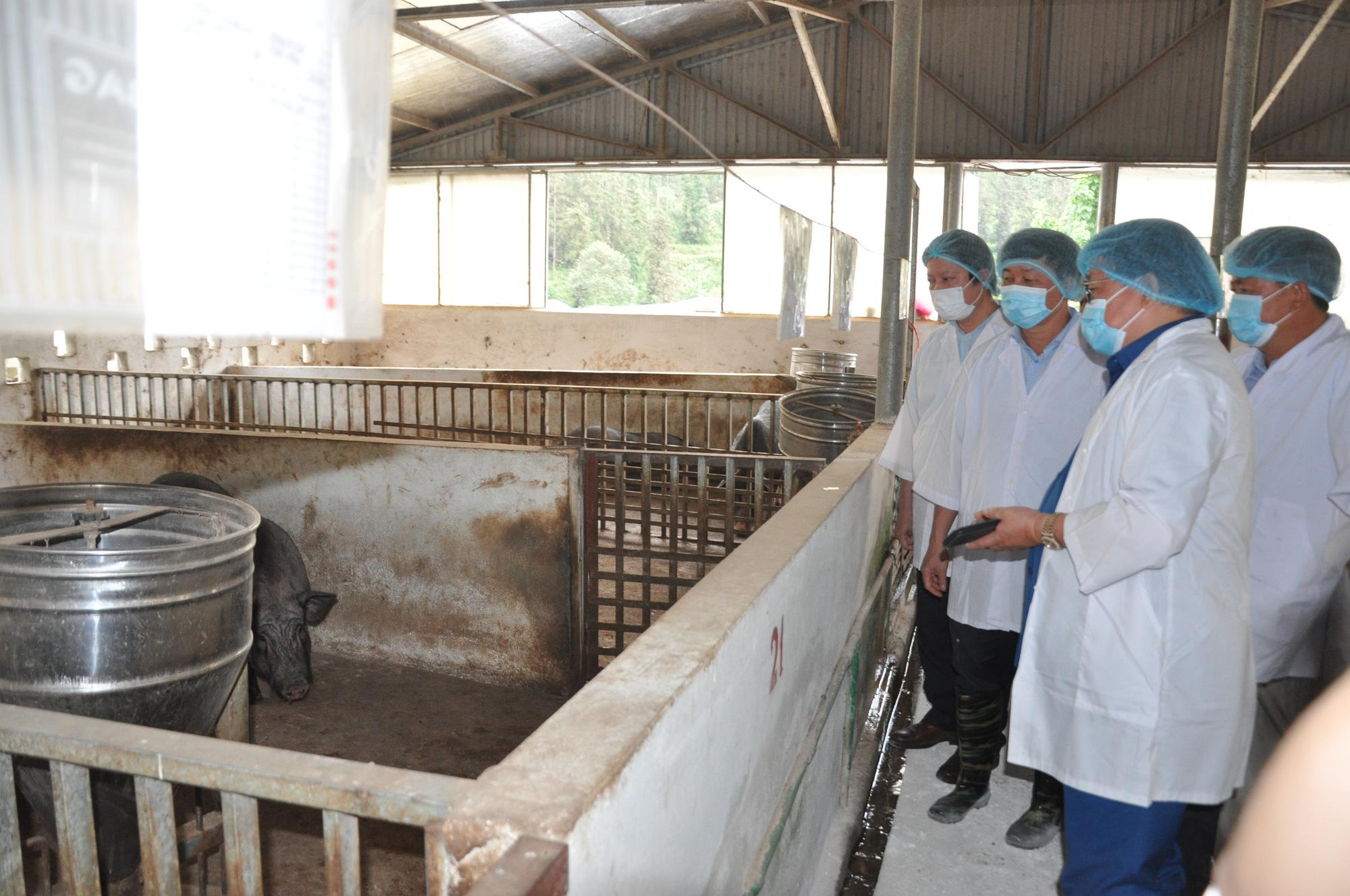 """Chủ tịch Hội Nông dân Việt Nam thăm """"đại bản doanh"""" con đặc sản thu 10 tỷ đồng mỗi năm ở Bắc Hà - Ảnh 3."""