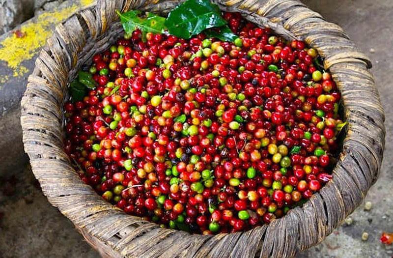Giá nông sản hôm nay 28/4: Cà phê tăng vọt, tiêu vẫn có xu hướng đi xuống - Ảnh 3.
