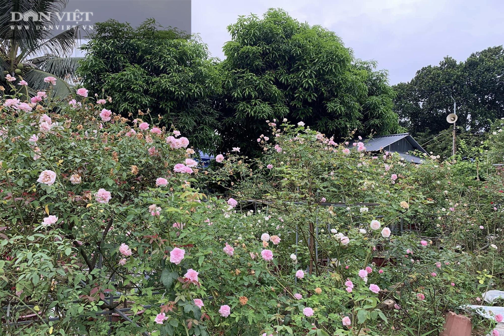 """Thái Nguyên: Trai trẻ 8X """"gác"""" bằng đại học về quê trồng thứ hoa thơm ngát cả vùng, kiếm hàng chục triệu đồng mỗi tháng - Ảnh 7."""