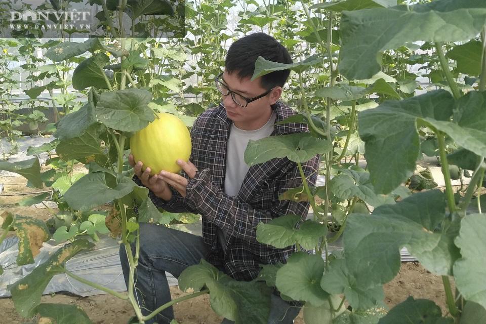 """Chàng trai xứ Nghệ đưa cả """"thế giới"""" công nghệ cao Israel về vườn nhà chăm cây cho quả khổng lồ... thành triệu phú - Ảnh 2."""