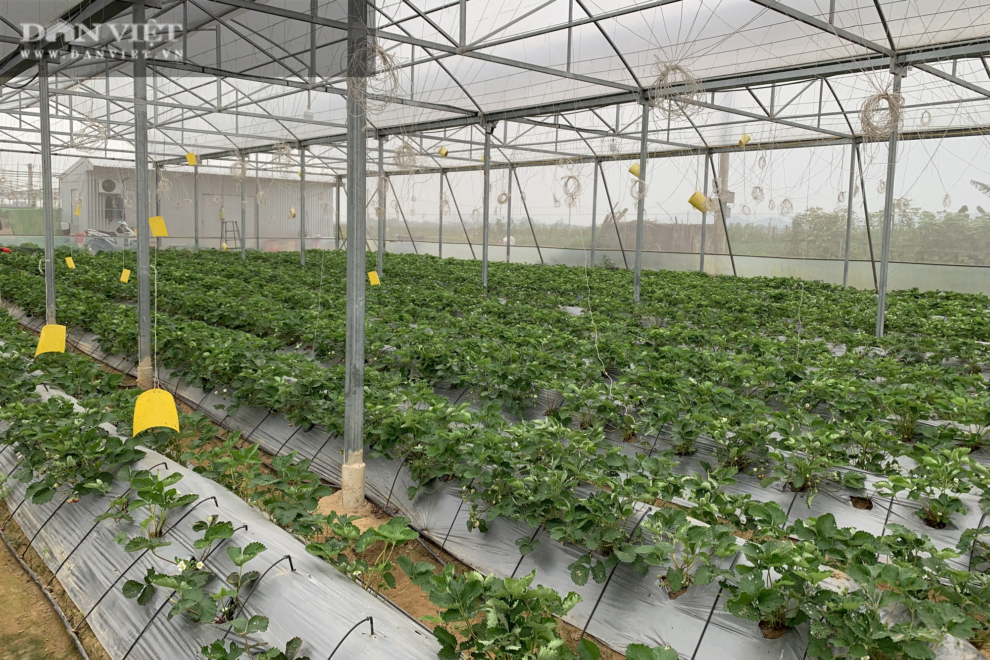 """Chàng trai xứ Nghệ đưa cả """"thế giới"""" công nghệ cao Israel về vườn nhà chăm cây cho quả khổng lồ... thành triệu phú - Ảnh 3."""