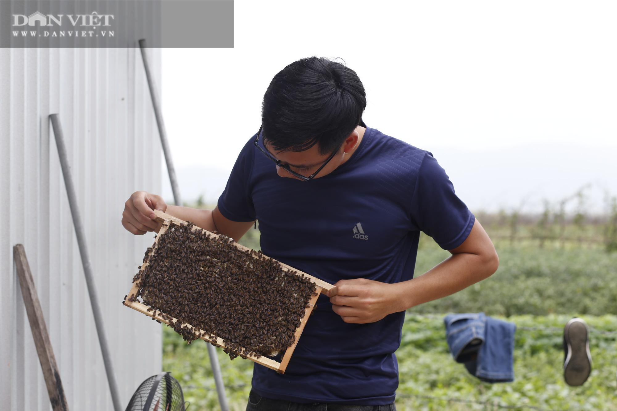"""Chàng trai xứ Nghệ đưa cả """"thế giới"""" công nghệ cao Israel về vườn nhà chăm cây cho quả khổng lồ... thành triệu phú - Ảnh 9."""