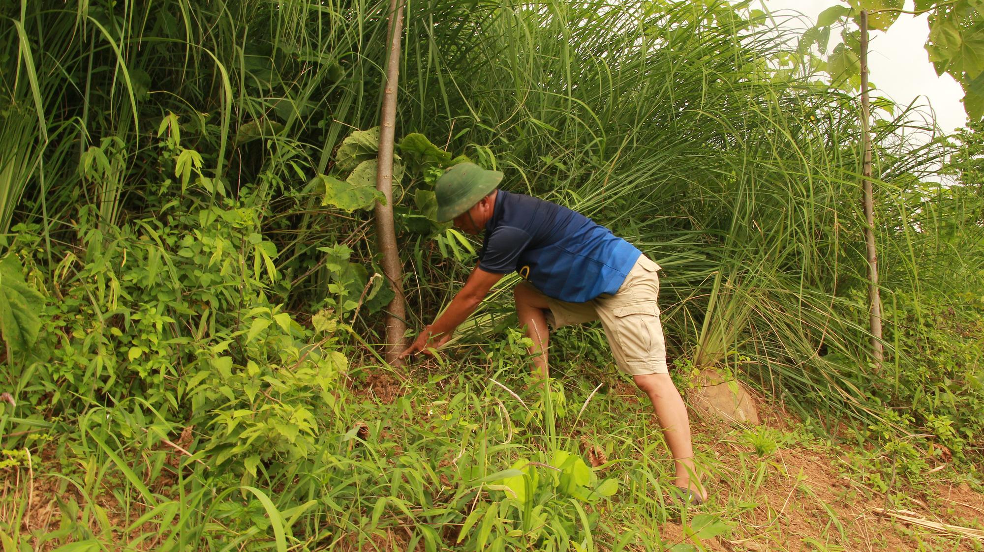 Hà Nội: Nông dân trồng thứ cây gì mà được Cục trồng trọt cấp bằng bảo hộ tới 25 năm, quý hơn gỗ pơ mu? - Ảnh 3.