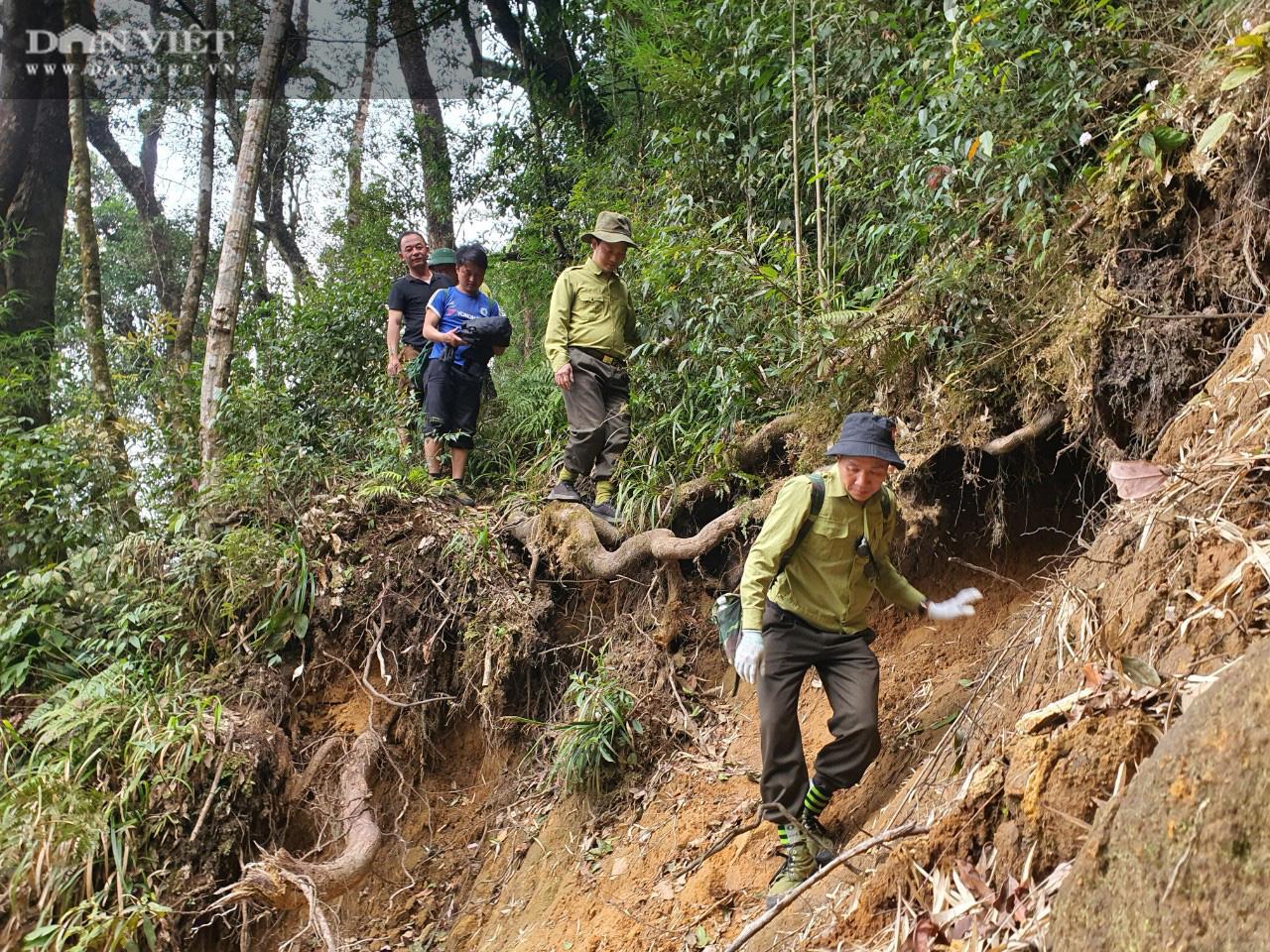Vụ phá rừng pơ mu cổ thụ Vườn quốc gia Hoàng Liên: Tạm đình chỉ công tác hai cán bộ kiểm lâm - Ảnh 1.
