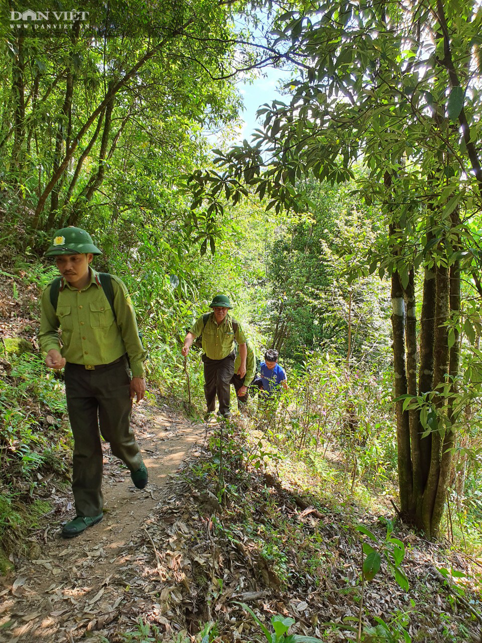 Vụ phá rừng pơ mu cổ thụ Vườn quốc gia Hoàng Liên: Tạm đình chỉ công tác hai cán bộ kiểm lâm - Ảnh 5.