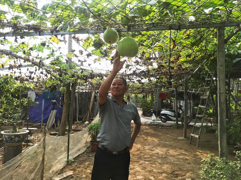 Hải Phòng: Giống bầu lạ, quả tròn khổng lồ mỗi trái nặng 15kg ăn cả tuần không hết - Ảnh 3.