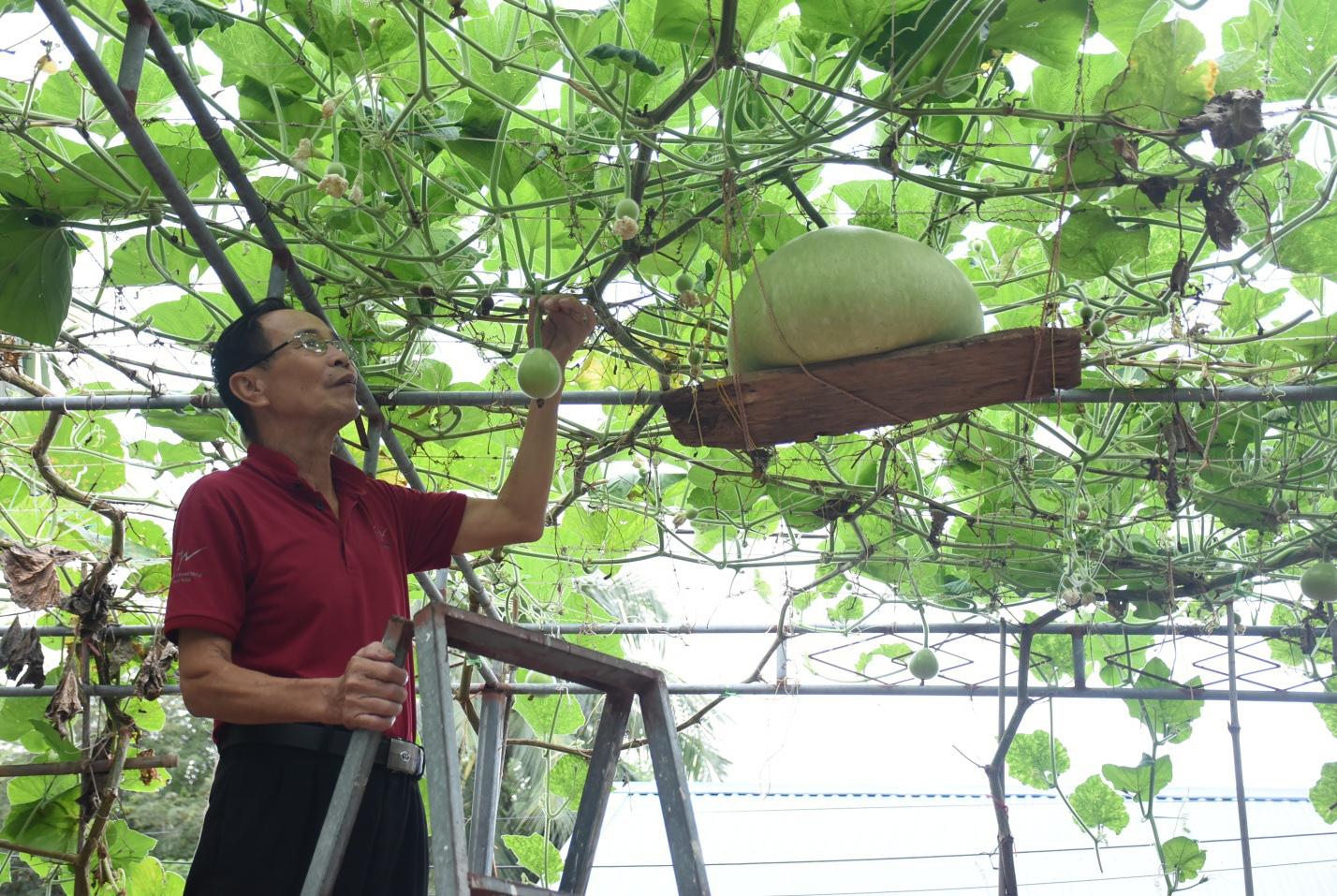 Hải Phòng: Giống bầu lạ, quả tròn khổng lồ mỗi trái nặng 15kg ăn cả tuần không hết - Ảnh 8.