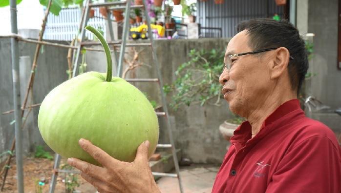 Hải Phòng: Giống bầu lạ, quả tròn khổng lồ mỗi trái nặng 15kg ăn cả tuần không hết - Ảnh 9.