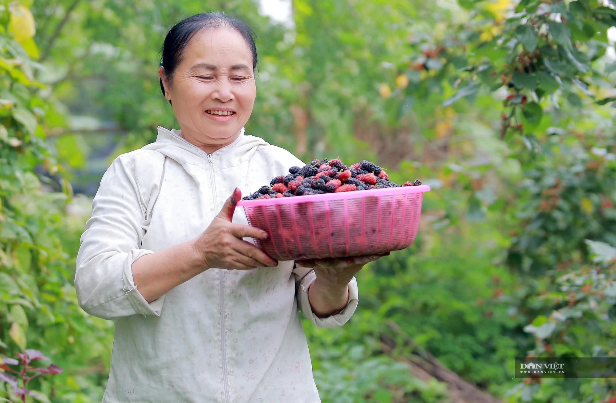 Nhộn nhịp mùa thu hoạch loại quả dùng để ngâm đường, lá cho tằm ăn ở Hà Nội - Ảnh 6.