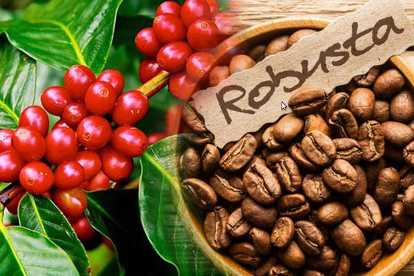 Giá nông sản hôm nay 3/4: Giá tiêu giảm nhẹ, cà phê đi ngang - Ảnh 1.