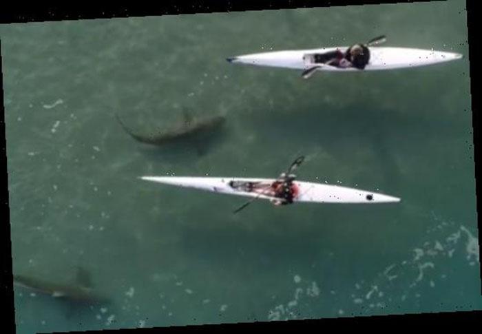 """Cảnh tượng rợn người khi đàn cá mập """"bao vây"""" thuyền kayak ngoài khơi Israel - Ảnh 1."""