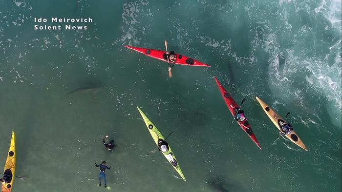 """Cảnh tượng rợn người khi đàn cá mập """"bao vây"""" thuyền kayak ngoài khơi Israel - Ảnh 2."""
