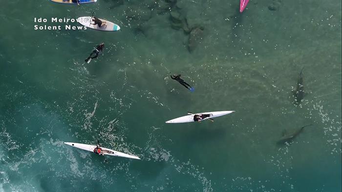 """Cảnh tượng rợn người khi đàn cá mập """"bao vây"""" thuyền kayak ngoài khơi Israel - Ảnh 3."""