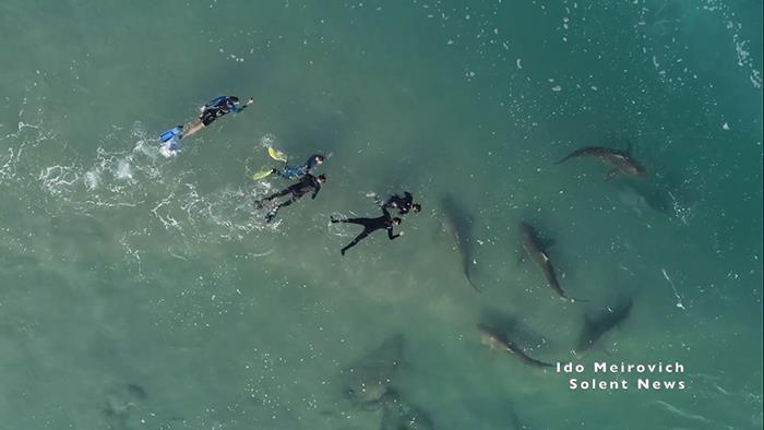 """Cảnh tượng rợn người khi đàn cá mập """"bao vây"""" thuyền kayak ngoài khơi Israel - Ảnh 4."""