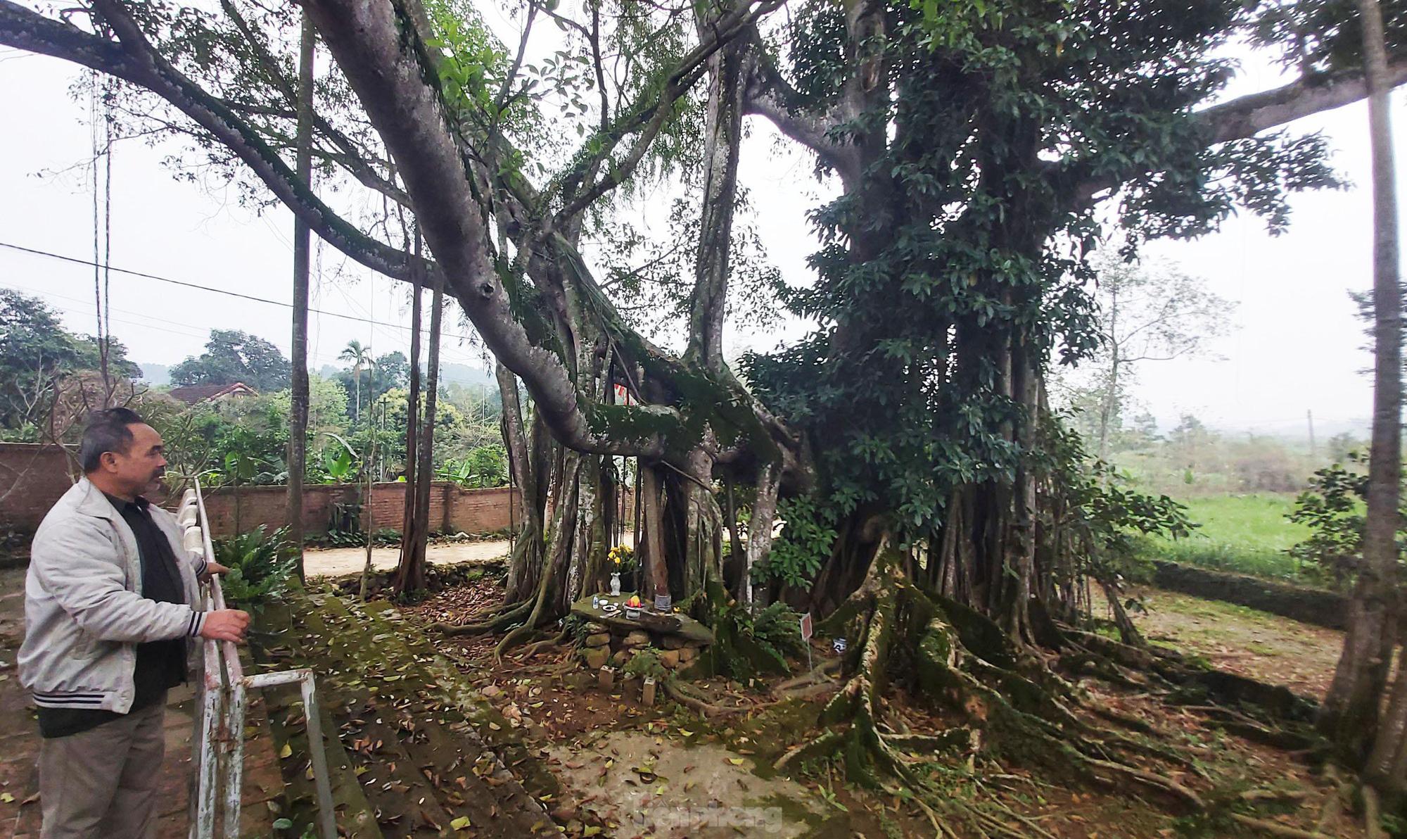 """""""Quái cây"""" đa Thần Rùa hàng ngàn năm tuổi với bộ rễ quá khủng như những con rắn khổng lồ - Ảnh 2."""