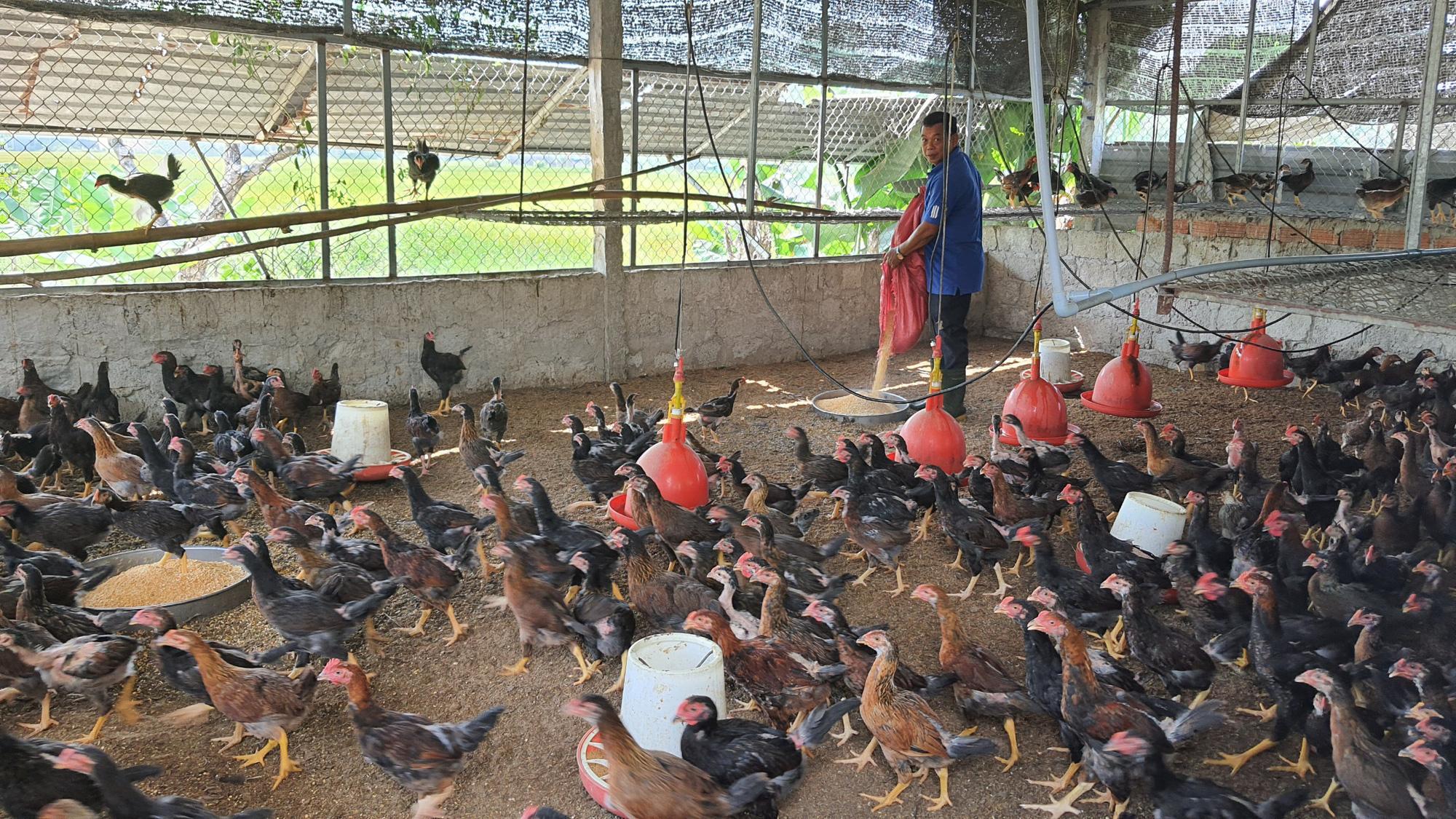 Được Agribank tiếp vốn, một nông dân ở Đà Nẵng vững tin tái đàn lợn lãi hơn 500 triệu đồng/năm - Ảnh 3.