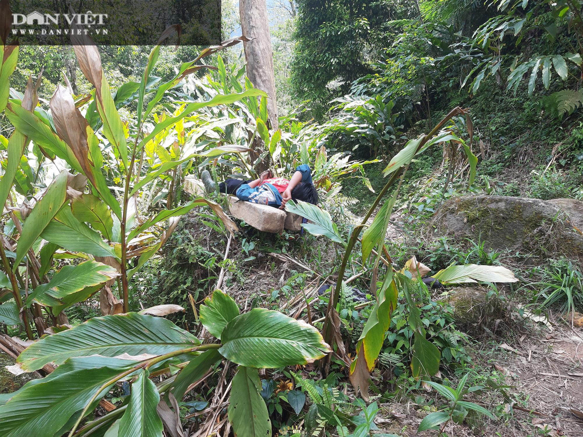 """Phá rừng pơ mu VQG Hoàng Liên (Bài 4): Phá rừng cho """"trùm buôn gỗ"""", chứ không phải để đóng quan tài! - Ảnh 12."""
