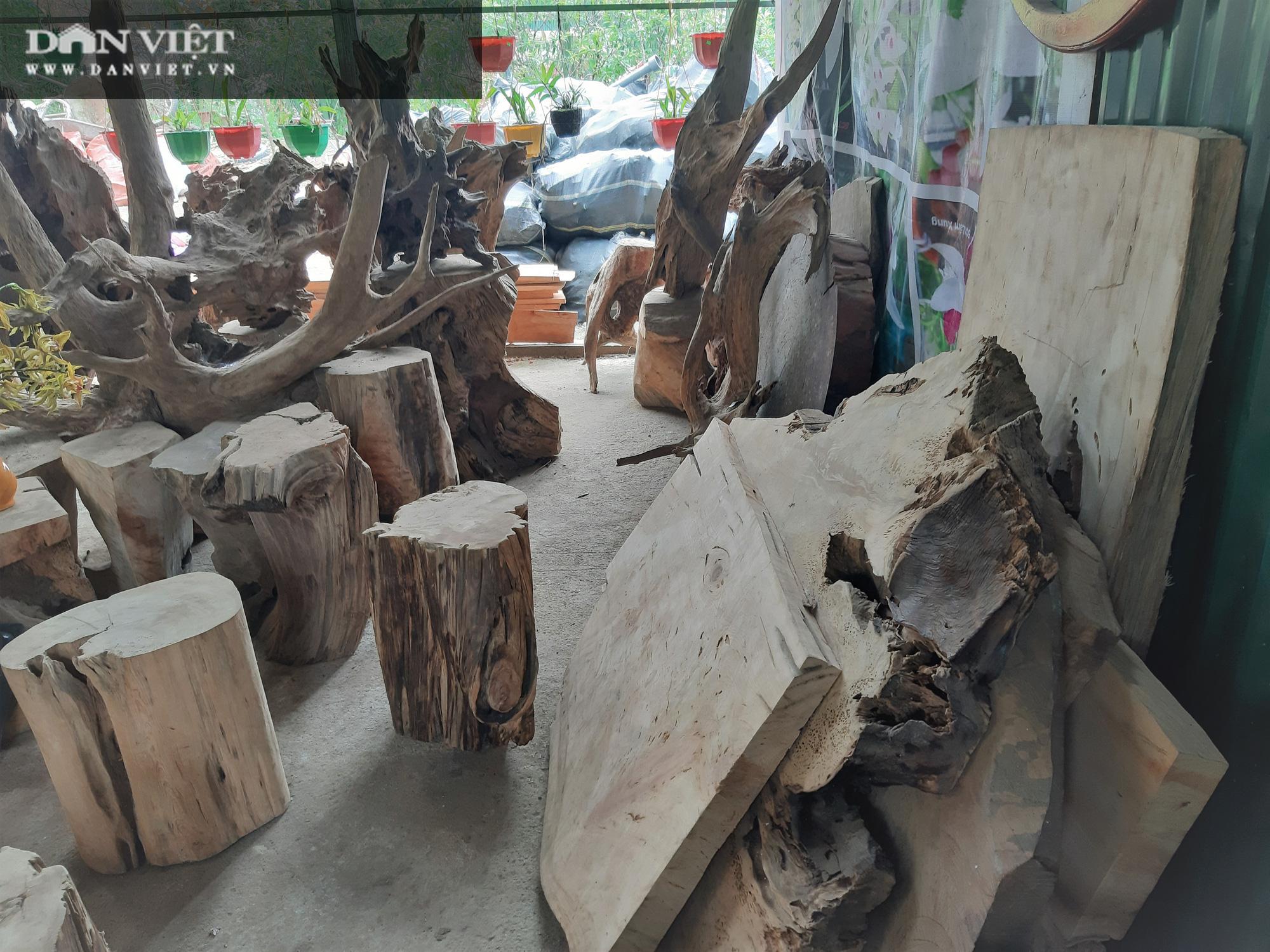 """Phá rừng pơ mu VQG Hoàng Liên (Bài 4): Phá rừng cho """"trùm buôn gỗ"""", chứ không phải để đóng quan tài! - Ảnh 2."""