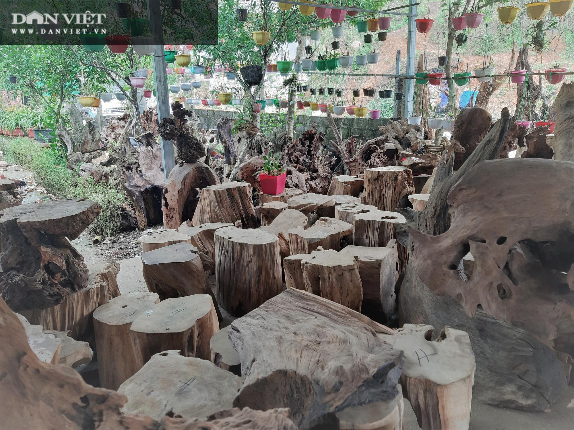 """Phá rừng pơ mu VQG Hoàng Liên (Bài 4): Phá rừng cho """"trùm buôn gỗ"""", chứ không phải để đóng quan tài! - Ảnh 3."""