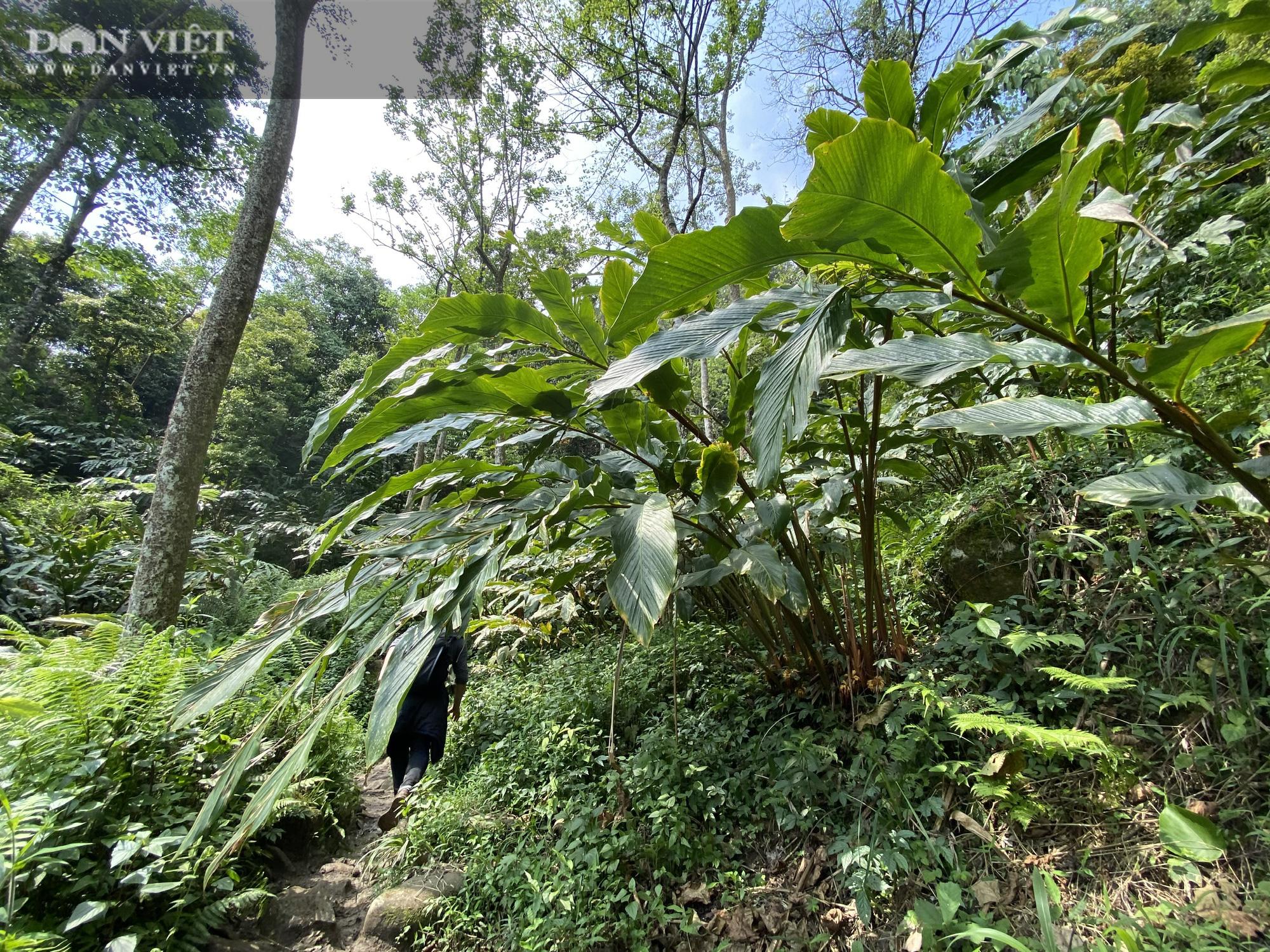 """Phá rừng pơ mu VQG Hoàng Liên (Bài 4): Phá rừng cho """"trùm buôn gỗ"""", chứ không phải để đóng quan tài! - Ảnh 13."""