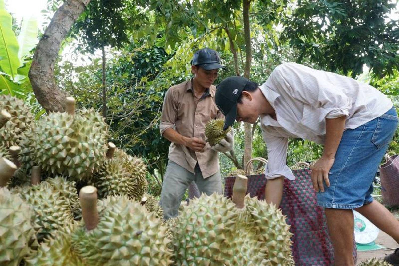 Tiền Giang: Giá loại trái gai góc này đang lập đỉnh, nông dân vét vườn bán trái thu tiền mỏi tay - Ảnh 2.