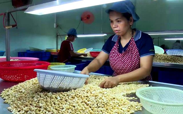 Một công ty chế biến hạt điều xuất khẩu ở Bình Phước