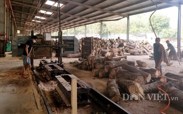 Nguồn gỗ cao su cung cấp cho sản xuất, chế biến cũng sẽ không còn nhiều.