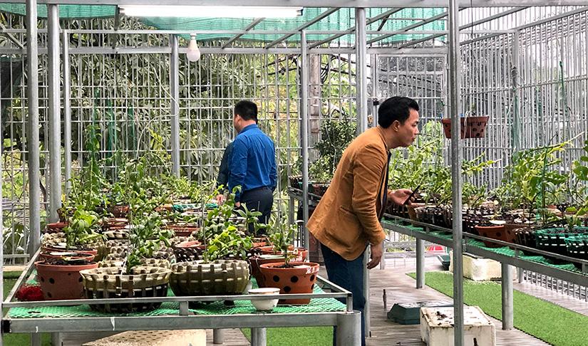 Hoa lan đột biến, những giao dịch hoa lan đột biến khủng, một vườn lan ở Tuyên Quang được định giá cả trăm tỷ đồng? - Ảnh 1.