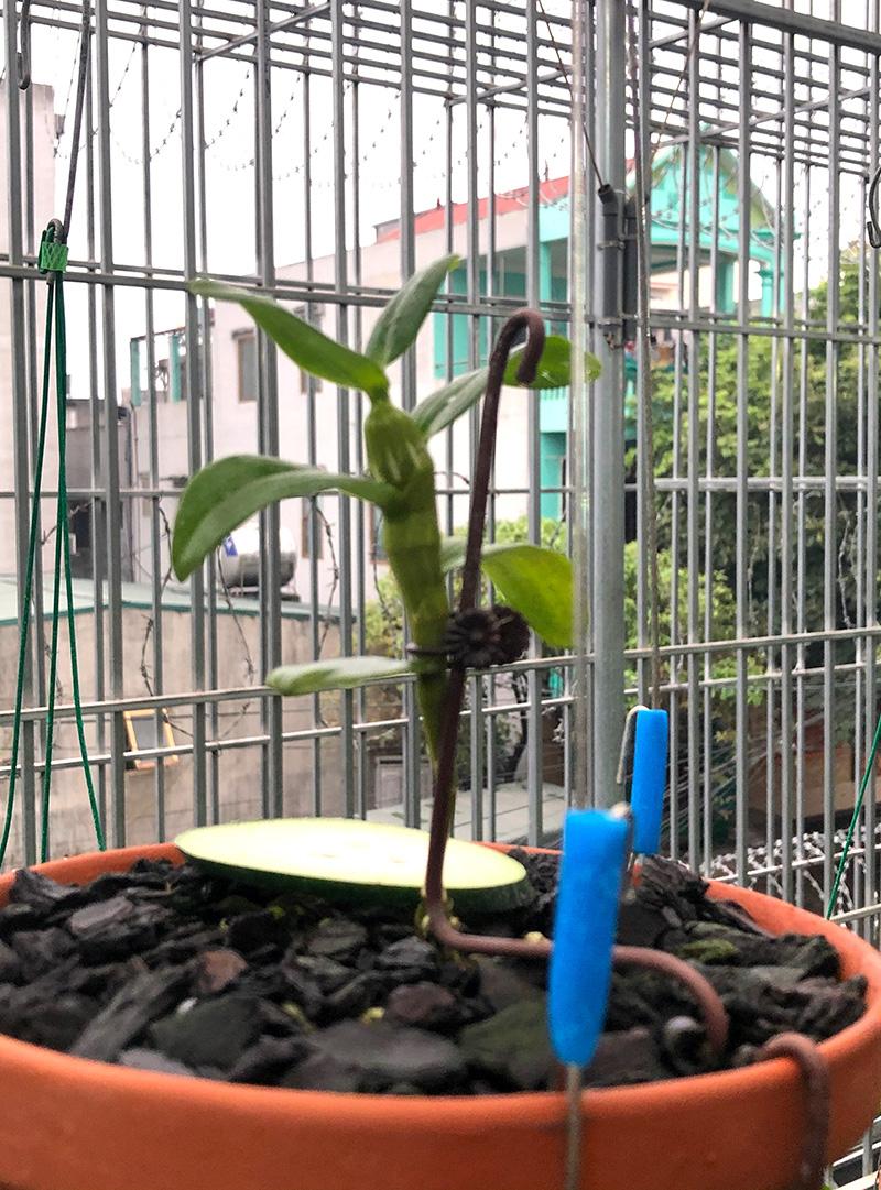 Hoa lan đột biến, những giao dịch hoa lan đột biến khủng, một vườn lan ở Tuyên Quang được định giá cả trăm tỷ đồng? - Ảnh 2.