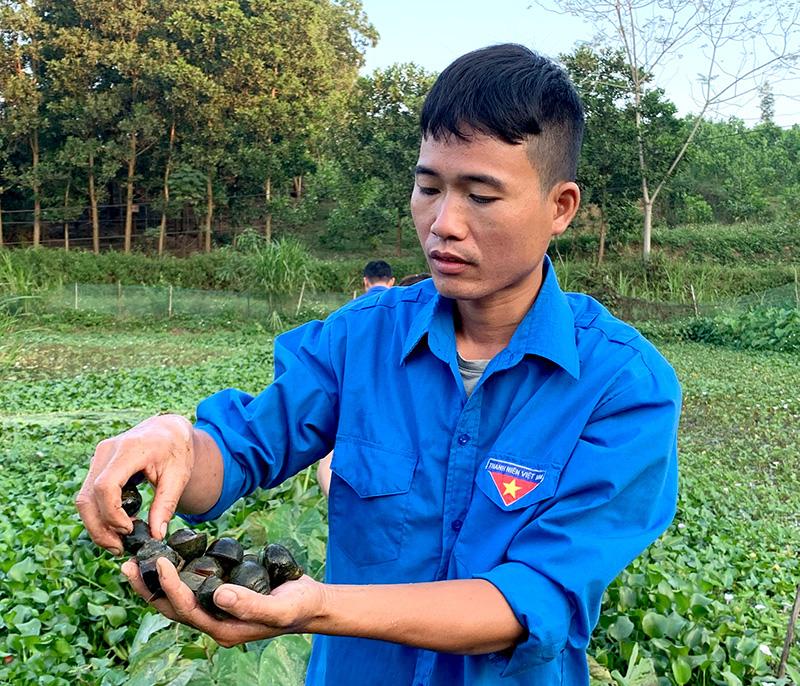 Tuyên Quang: Nuôi chơi chơi con ham ăn bèo, tối ngày lủi dưới ao mà đẻ rõ lắm, anh nông dân bất ngờ giàu lên - Ảnh 1.