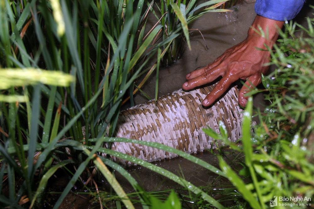 Nghệ An: Thợ săn con vừa trơn vừa nhớt tiết lộ bí kíp làm thứ mồi bẫy cực nhạy, không cho lươn thoát - Ảnh 7.