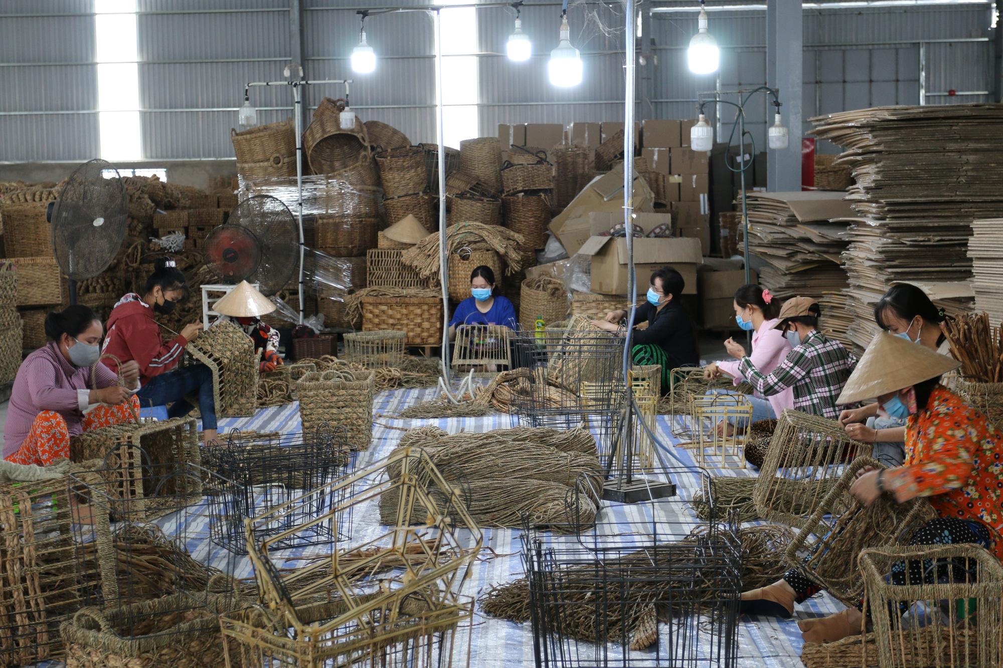 Agribank Đồng Tháp tiếp sức đưa cây lục bình xuất ngoại - Ảnh 1.