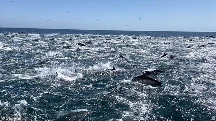 """Trải nghiệm để đời - chứng kiến cảnh cả ngàn con cá heo """"tháo chạy tán loạn"""" - Ảnh 3."""