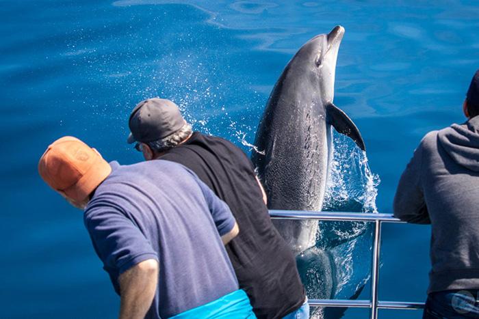 """Trải nghiệm để đời - chứng kiến cảnh cả ngàn con cá heo """"tháo chạy tán loạn"""" - Ảnh 8."""