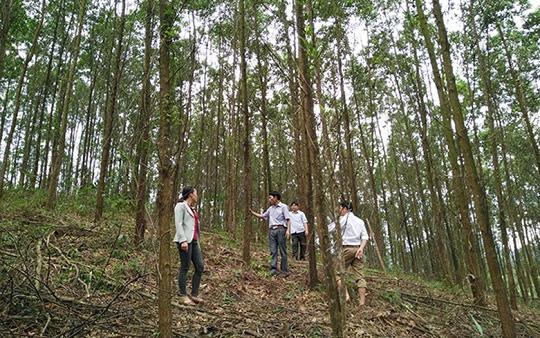 Quảng Bình: Nhiều mô hình trồng trọt, chăn nuôi giúp nông dân tăng thu nhập mỗi năm