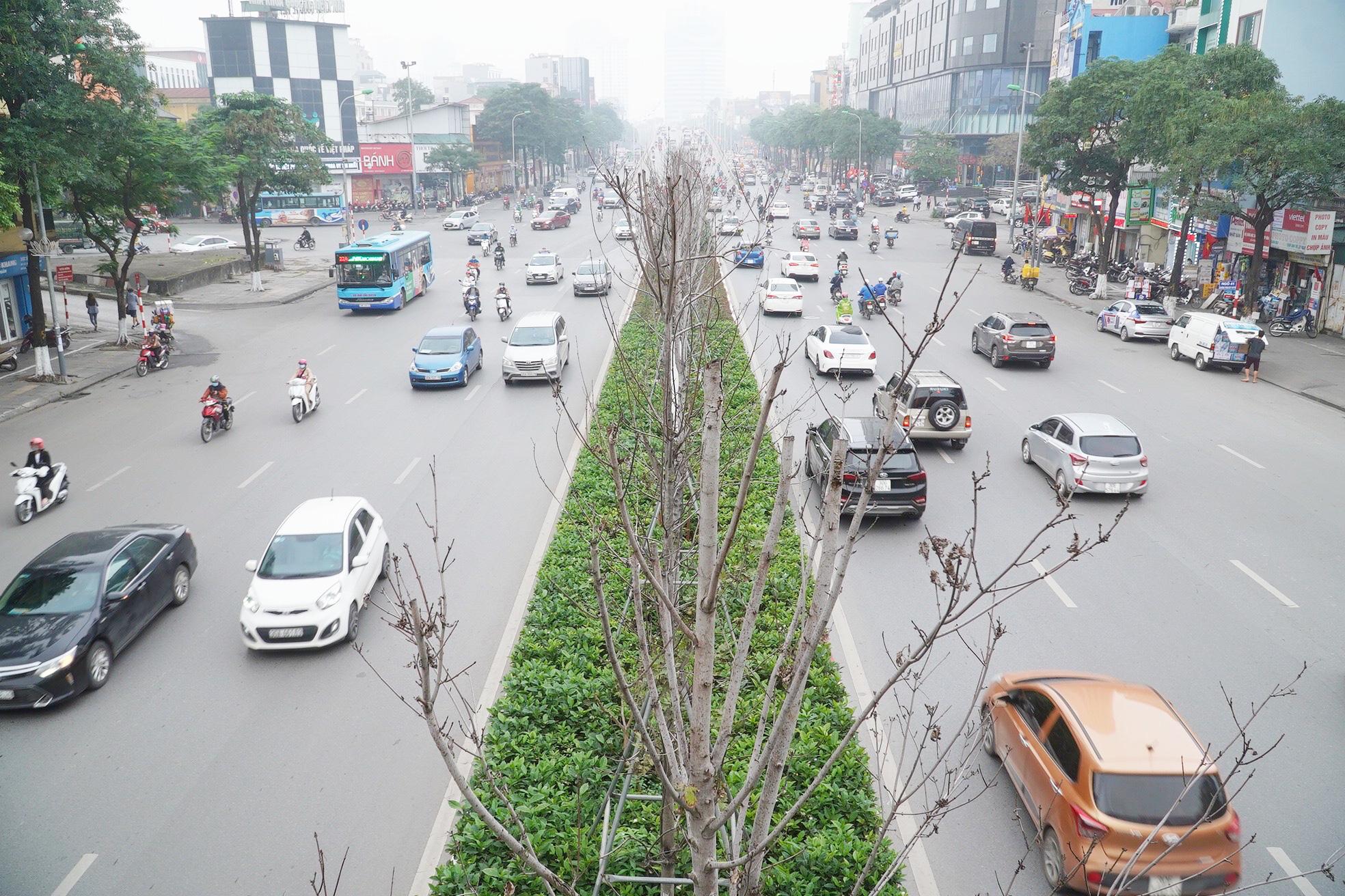 Công ty cây xanh nói gì khi trồng bàng lá nhỏ thay phong lá đỏ trên tuyến đường đẹp nhất Hà Nội? - Ảnh 6.