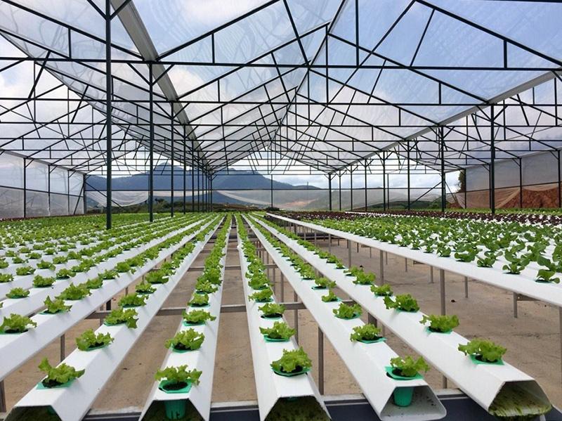 """Mới: 7 ưu đãi """"sốc"""" cho doanh nghiệp đầu tư vào các dự án nông nghiệp - Ảnh 3."""