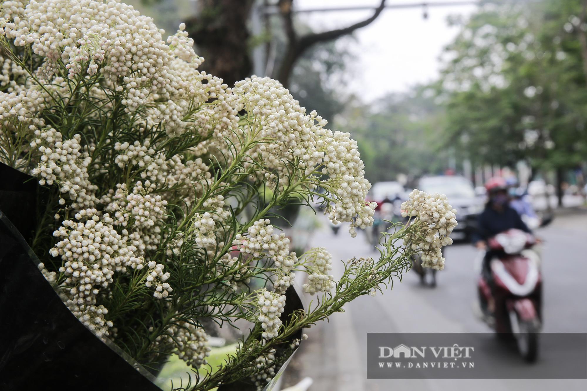 Người Hà Nội phát sốt với loài hoa nhập ngoại mới - Ảnh 1.